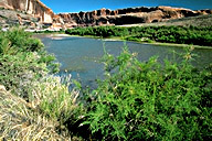 The Colorado River - view # 3 from Hwy 128
